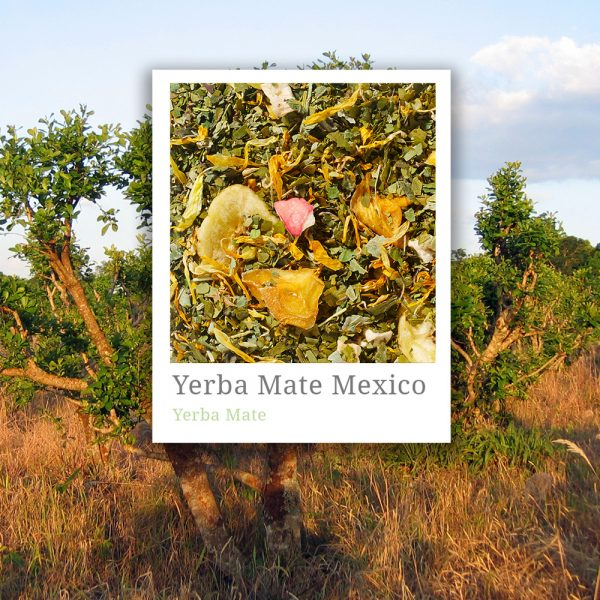 Yerba Mate Mexico Tea